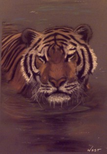 Tiger in water. Done in pastels.